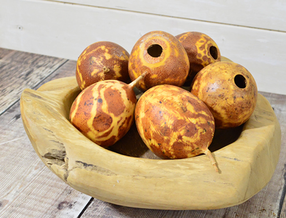 Fired Brown Passion fruit