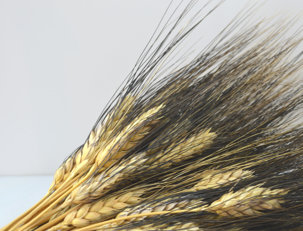 Black Beard Wheat Sheaf