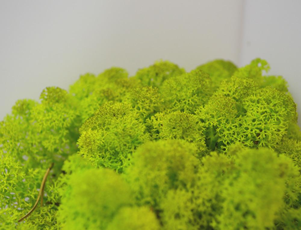 Spring Green Reindeer Moss