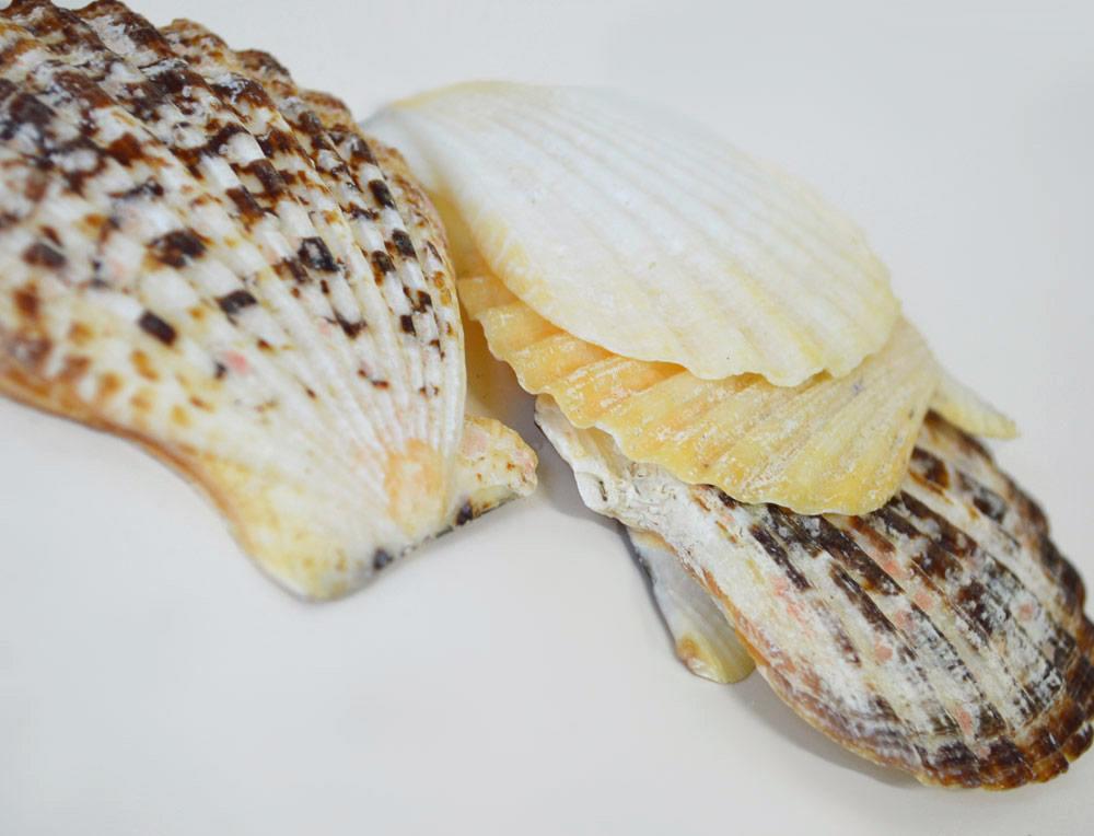 Radula Shells