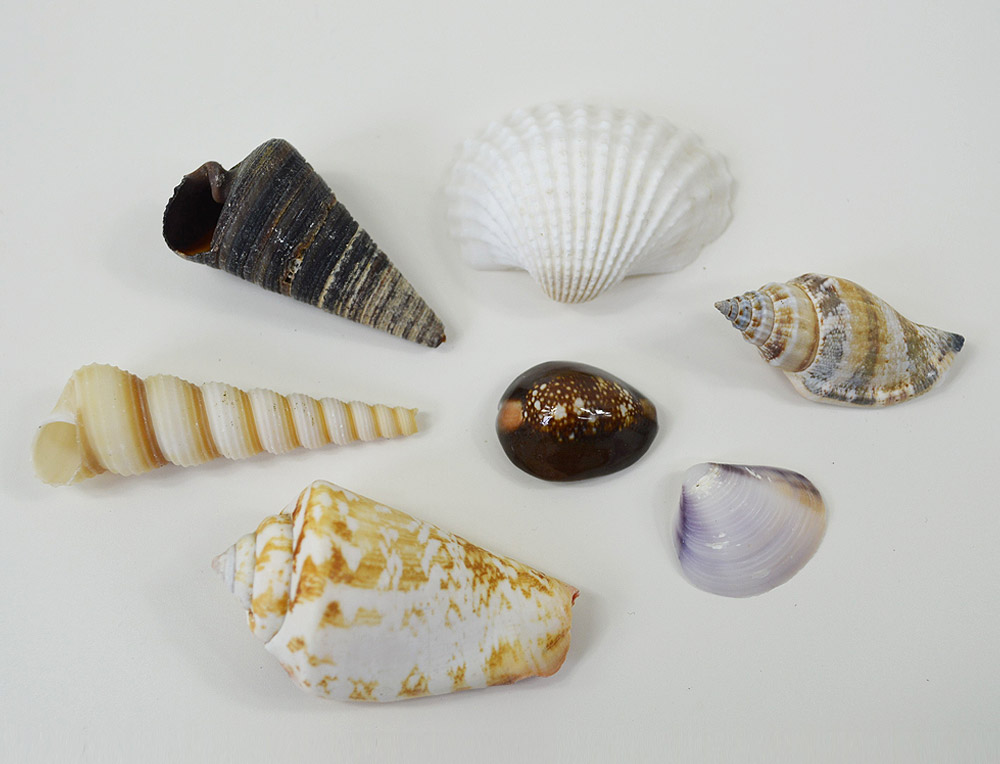 Medium Seashell Mix
