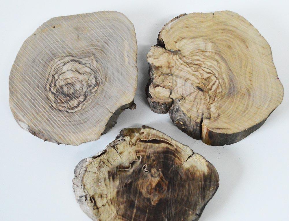 Olive Tree Wood slices